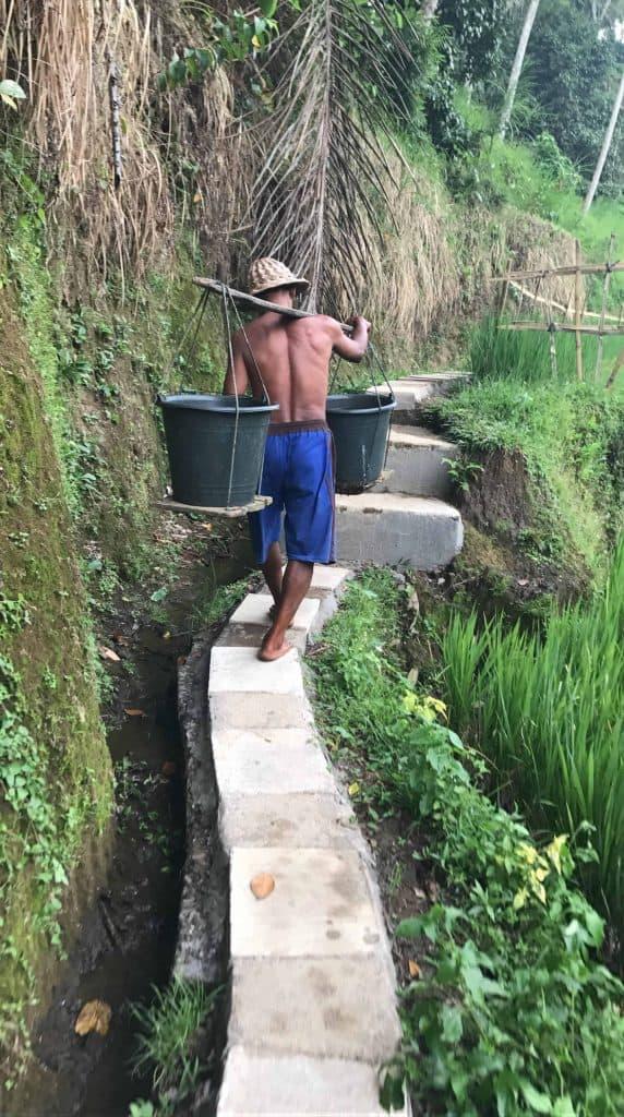 Champ de rizière Tegallalang Bali
