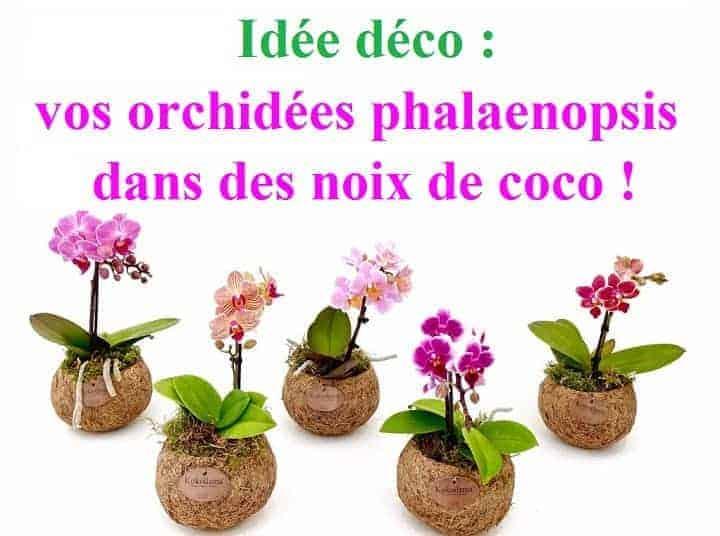mini orchidee plante facile entretien