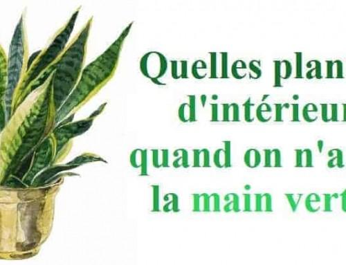 Quelles plantes d'intérieur choisir quand on n'a pas la main verte?