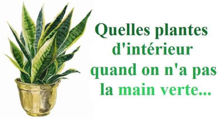 plantes interieur sans main verte