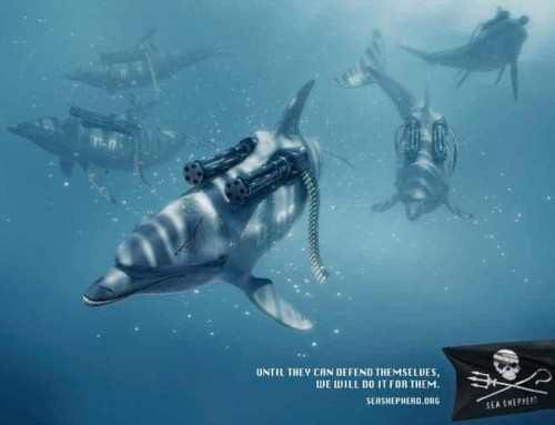 "L'association ""Sea Shepherd"" : défense des océans"